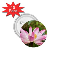 A Pink Lotus 1.75  Button (10 pack)