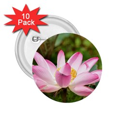 A Pink Lotus 2.25  Button (10 pack)