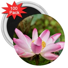 A Pink Lotus 3  Button Magnet (100 Pack)