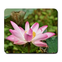 A Pink Lotus Large Mouse Pad (rectangle)