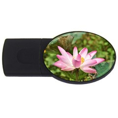 A Pink Lotus 4gb Usb Flash Drive (oval)