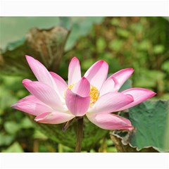 A Pink Lotus Canvas 16  x 20  (Unframed)