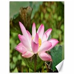 A Pink Lotus Canvas 18  x 24  (Unframed)