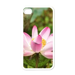 A Pink Lotus Apple Iphone 4 Case (white)