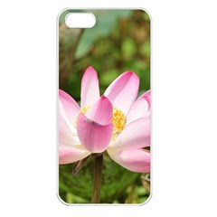 A Pink Lotus Apple iPhone 5 Seamless Case (White)