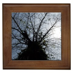 An Old Tree Framed Ceramic Tile