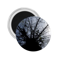 An Old Tree 2.25  Button Magnet