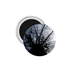 An Old Tree 1.75  Button Magnet
