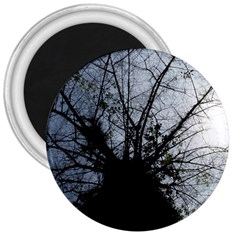 An Old Tree 3  Button Magnet