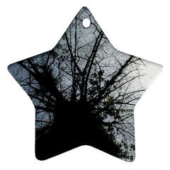 An Old Tree Star Ornament