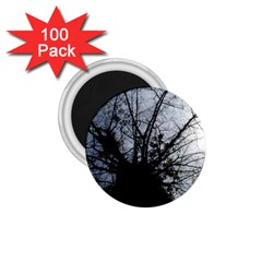 An Old Tree 1.75  Button Magnet (100 pack)