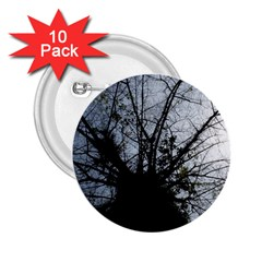 An Old Tree 2 25  Button (10 Pack)