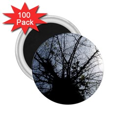 An Old Tree 2.25  Button Magnet (100 pack)