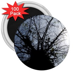 An Old Tree 3  Button Magnet (100 Pack)