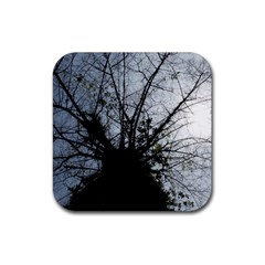 An Old Tree Drink Coaster (square)
