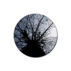 An Old Tree Drink Coasters 4 Pack (Round)