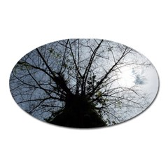 An Old Tree Magnet (Oval)