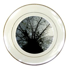 An Old Tree Porcelain Display Plate