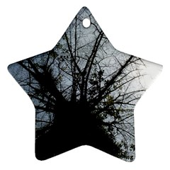 An Old Tree Star Ornament (Two Sides)