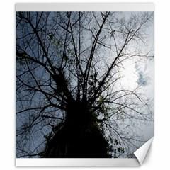 An Old Tree Canvas 20  X 24  (unframed)