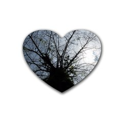 An Old Tree Drink Coasters 4 Pack (Heart)