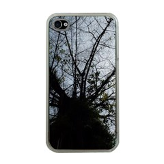 An Old Tree Apple Iphone 4 Case (clear)