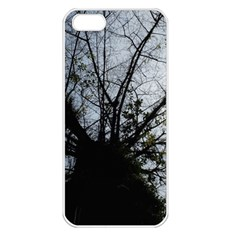 An Old Tree Apple Iphone 5 Seamless Case (white)