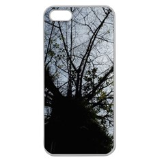 An Old Tree Apple Seamless iPhone 5 Case (Clear)