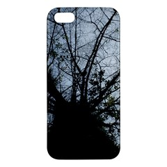 An Old Tree Iphone 5 Premium Hardshell Case