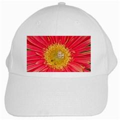 A Red Flower White Baseball Cap