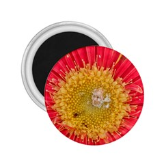 A Red Flower 2.25  Button Magnet