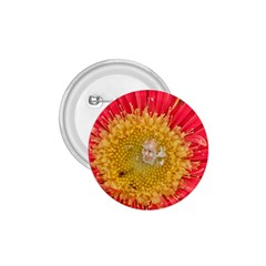 A Red Flower 1 75  Button