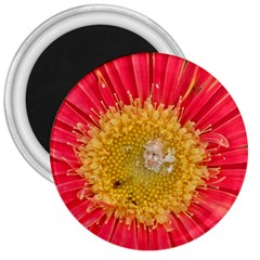 A Red Flower 3  Button Magnet