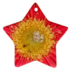 A Red Flower Star Ornament