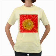 A Red Flower  Womens  T-shirt (Yellow)