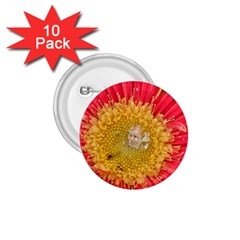 A Red Flower 1 75  Button (10 Pack)
