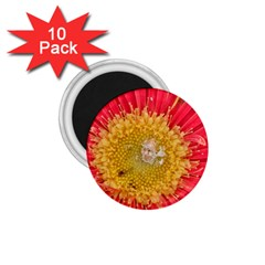 A Red Flower 1 75  Button Magnet (10 Pack)