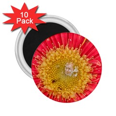 A Red Flower 2.25  Button Magnet (10 pack)