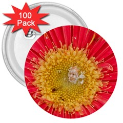 A Red Flower 3  Button (100 pack)