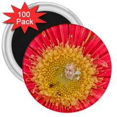 A Red Flower 3  Button Magnet (100 pack)