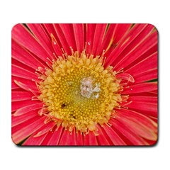 A Red Flower Large Mouse Pad (Rectangle)