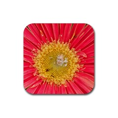 A Red Flower Drink Coaster (square)