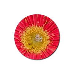 A Red Flower Drink Coasters 4 Pack (Round)