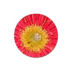 A Red Flower Magnet 3  (round)