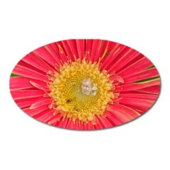 A Red Flower Magnet (oval)