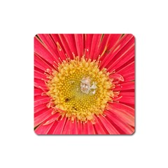 A Red Flower Magnet (square)