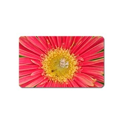 A Red Flower Magnet (name Card)