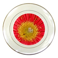 A Red Flower Porcelain Display Plate