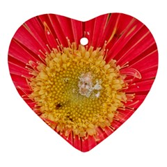 A Red Flower Heart Ornament (two Sides)