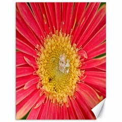 A Red Flower Canvas 18  x 24  (Unframed)
